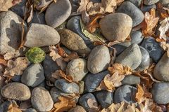 Autumn leaves and Stones stock photography