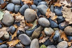 Autumn leaves and rocks royalty free stock photo