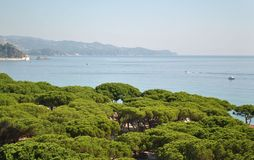 View on the pine forest and the Mediterranean Sea Royalty Free Stock Photos
