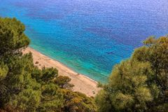 A view through a pine forest on a turquoise sea stock images