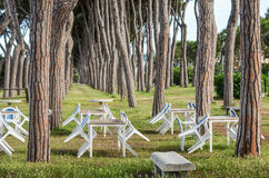 View of pine-tree trunks and cafe tables, Pineto. The italian park view - pine-tree trunks and empty tables chairs Royalty Free Stock Photo