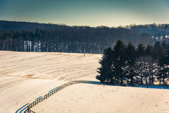 View of pine trees in a snow-covered farm field in rural York Co Stock Photo