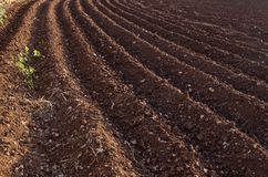 View of the plowed land. Furrows from the plow. Agriculture. Preparing for potato planting Stock Photography