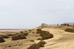 View point over salt lakes Mas des Crottes, Camargue, France Royalty Free Stock Photo
