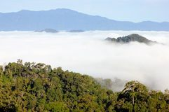 The view point wetlands sea fog. Royalty Free Stock Images