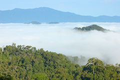 View point wetlands sea fog. Stock Image