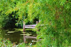 View of the pond. On the background of shrubs Stock Images