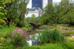 View at a pond in Central Park, New York Stock Image