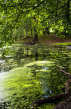 View of a pond covered in duckweed Stock Photos