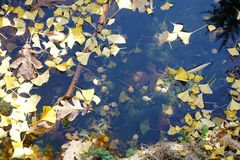 Detail of a pond in autumn,with  fallen leaves on blue water Stock Photography