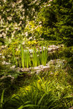 View of pond. View of small pond in the garden Royalty Free Stock Photos