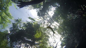 View from pool underwater on the trees and bathers. View from thermal pool underwater on the trees and hands bathers. It is seen as a rising from the bottom of a stock video footage