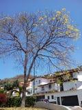 A view of the popular urbanization Cumbres de Curumo in Caracas Royalty Free Stock Photos