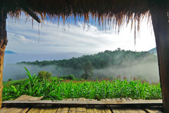 View from porch of bamboo hut on early morning Royalty Free Stock Photo