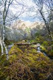 View of the post-glacial Caledonian Forest at Beinn Eighe Nature Reserve near Kinlochleven in the Highlands of Scotland. This rare and untouched landscape is stock images