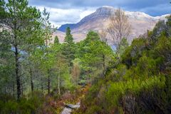 View of the post-glacial Caledonian Forest at Beinn Eighe Nature Reserve near Kinlochleven in the Highlands of Scotland. This rare and untouched landscape is royalty free stock photo
