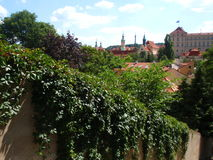 View of Prague Castle and Saint Vitus cathedral from far, Prague, Czech Republic.  Wall with green creeper Stock Photography