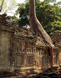 A view of the Preah Khan temple in Angkor Archaeological Park showing damaging tree roots Stock Images