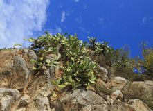 View Cactus on a rock. Nafplion. Greece royalty free stock photos