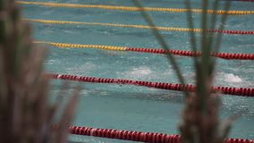 View professional swimmers training in swimming pool, butterfly. Swimmers swim fast butterfly during training stock video footage