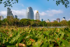 View of public park and business district with green grass foreground and blue sky background stock photography