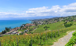 View on Pully and city of Lausanne Switzerland. Switzerland, Lutry village, view on part of Lausanne city, lake Leman, vineyard and beautiful blue sky Royalty Free Stock Image