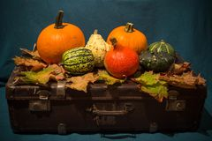 View of the Pumpkins on the old suitcases / Autumn and Halloween concept Royalty Free Stock Photo