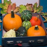 Pumpkins in the old suitcases / Autumn and Halloween concept Stock Images