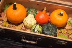 View of the Pumpkins in the old suitcases / Autumn and Helloween concept Stock Images