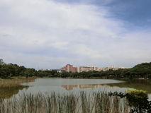 View of Punggol Park. View of the pond in Punggol Park with blocks of housing apartments in the background Royalty Free Stock Image