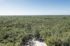 View from the  pyramid in Coba, Mexico Stock Photo