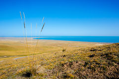 View of Qinghai lake. From a small mountain, at Qinghai province, China royalty free stock photo