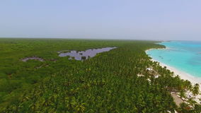 View from quadrocopters a huge palm forest and the coast with white sand stock footage