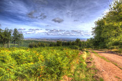 View from Quantock Hills Somerset with trees and ferns in colourful HDR towards Bristol Channel Royalty Free Stock Photo