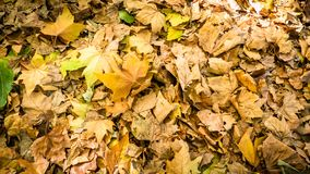 Queen Square Park Autumn Leaves in Bath England. View of Queen Square Park Autumn Leaves in Bath England royalty free stock photo