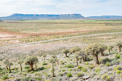 View from the Quiver Tree Forest at Gannabos Stock Photography