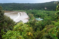 View of rainforest and beach Royalty Free Stock Images