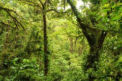 A view of the rainforest Stock Images