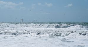 View of rainy storm seascape. Seagulls over the waves in the sea fishing. Twisting waves. Stock Photos