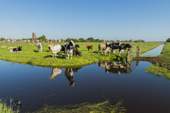 View on Ransdorp with Cows Royalty Free Stock Photo