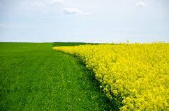 View of field and landscape with young grain under blue sky with clouds royalty free stock image