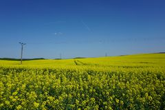 View of rapeseed field agriculture, power lines, spring landscape. View of rapeseed field agriculture, spring landscape. Power lines in background Czech republic royalty free stock photos