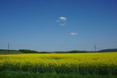 View of rapeseed field agriculture, spring landscape. Forest and power lines in bacground Czech republic royalty free stock image