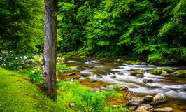 View of Raven Fork, near Cherokee, North Carolina. Royalty Free Stock Images