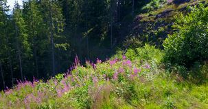View of a ravine in the forest, summer stock footage