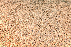 View Of Raw Coffee Beans. Close Up View Of Raw Coffee Beans Background Stock Images