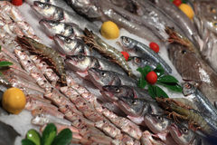 View raw fishes on the ice Royalty Free Stock Photography