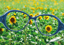 View from reading eyeglasses on beautiful nature view Royalty Free Stock Image