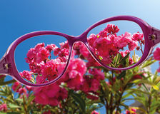 View from reading eyeglasses on beautiful nature view Royalty Free Stock Photos