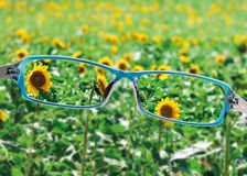 View from reading eyeglasses on beautiful nature view Stock Photos